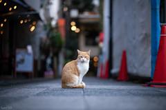 猫 (fumi*23) Tags: ilce7rm3 sony street sel85f18 a7r3 animal alley katze gato cat chat neko bokeh dof ねこ 猫 ソニー emount