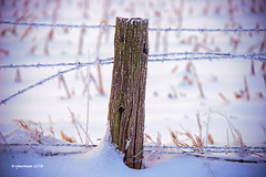 Frosty_198935 (rjmonner) Tags: agriculture agricultural agronomy agronomic aged country cornbelt corn cornfield dilapidated decayed dormant exposed earlylight earth farming fence field fencefriday iowa isolated ice nikon land midwest morning metal neglected outdoors old post rural relic rustic snow texture textured usa unpainted vintage wire barbedwire