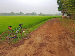 Bicycle at roads end e (SierraSunrise) Tags: thailand phonphisai nongkhai isaan esarn roads dirt unpaved bicycle farming agriculture rice ricepaddies ricepaddy paddyrice