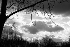 . (just.Luc) Tags: clouds nubes nuages wolken sky lucht ciel luft bn nb zw monochroom monotone monochrome bw trees bomen bäume arbres árbol vlaanderen flandres flanders belgië belgien belgique belgium belgica
