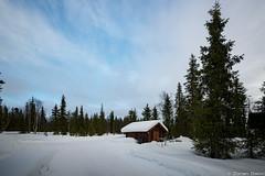 Z19_1294 LT (Zoran Babich) Tags: lapland lappi finland suomi winter snow landscape lainio