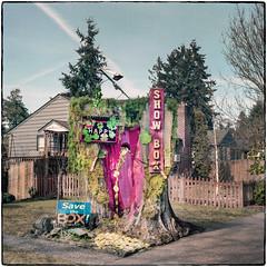 Yard Art (NoJuan) Tags: film filmshooter ikonta zeiss zeissikon zeissikonta ikonta52116 square squareformat 120rollfilm 120film portra160 kodakportra160 kodakfilm seattlewa washingtonstate mediumformat mediumformatfolder foldingmediumformat 6x6 214square itsasign yardart publicart