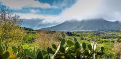 Almendros y cactus (etoma/emiliogmiguez) Tags: tenerife islascanarias santiago del teide valle arriba almendros cactus pueblo nubes montaña
