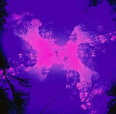 Looking Up, Fairy Glen, April 2016 (Mano Green) Tags: trees sky cross processed diana mini agfa precisa colour slide 100 35mm film fairy glen black isle scotland uk april spring 2016 square multiple exposure surreal
