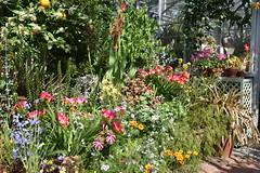 In the Corner (Eddie C3) Tags: marcopolostufanoconservatory wavehill bronxnewyork botanicalgardens