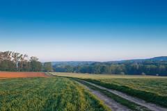 20180505-Canon EOS 6D-8131 (Bartek Rozanski) Tags: mozet namur belgium ardennes belgie belgique ardennen spring agriculture field cow pasture morning mist road