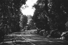 Mount Dandenong Tourist Road (5) (Matthew Paul Argall) Tags: spartus35fmodel400 35mmfilm blackandwhite blackandwhitefilm 100isofilm kentmerepan100 road street mountdandenongtouristroad