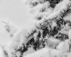 TowerGrovePark_SAF4928 (sara97) Tags: copyright©2019saraannefinke missouri photobysaraannefinke saintlouis towergrovepark towergrovepark2019 winter winter201819 snow monochrome bw blackandwhite blackwhite