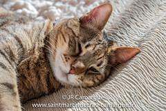 JRCamargue-2.jpg (JRCamargue) Tags: leicasl provence camargue cat portrait