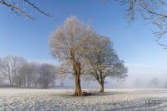 Winter light. (miketonge) Tags: claughtononbrock winter trees snow mist lancashire frost