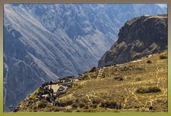 Mirador del Condor  Perú (Fotocruzm) Tags: fotocruzm mcruzmatia perú arequipa yanque chivay condor valledelcolca cañóndelcolca inca collaguas cabanas