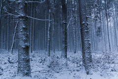 Cold gets colder (Petr Sýkora) Tags: les sníh zima winter snow trees nature forest wanderlust
