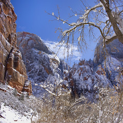 Zion National Park in the Snow (swissuki) Tags: zion national nature park landscape mountain snow sky usa ut utah cablemountain