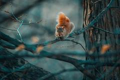 (12thJohn) Tags: newyork spring animal nature nikon telephoto tree wildlife zoom