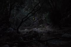 Clarobosque (EyesOnPortfolio) Tags: bosque claro maleza atardecer árbol plantas riachuelo