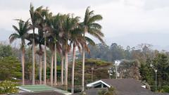 Costa Rica - Hotel view at San Jose (Rez Mole) Tags: costa rica hotel bougainvilla san jose