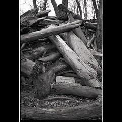 Full Frontal. (probusphotos) Tags: bnwphotography fotografia filmisnotdead voigtlander 35mm cherokeepark voigtlanderbessa ifttt instagram