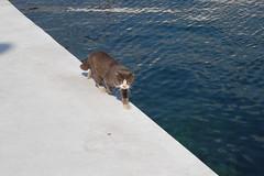 Bogaz_20080316_20 (T_Borcbakan) Tags: istanbul bosphorus bogazici boğaz bogaz turkey türkei türkiye cat kedi