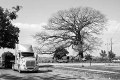 Tráiler y árbol (Marcos Núñez Núñez) Tags: árbol streetphotography blackandwhite byn bw streetphotographer camión tráiler urban oaxaca tuxtepec canon canoneosrebelt5 vecindario