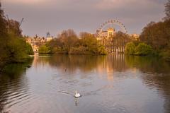 St. James's Park, London (romanboed) Tags: leica m 240 europe uk gb united kingdom great britain england london spring travel summilux 50 st jamess park eye skyline pond swan sunset