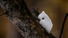 Steep climb. \ Крутой подъём. (Nitohap) Tags: лес сказка зима снег деревья фигура юмор forest fairytale winter snow trees figure humor d850 200500
