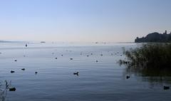 Vacances_0796 (Joanbrebo) Tags: bodensee llac lago lake lac konstanz badenwürttemberg deutschland de canoneos80d eosd efs1855mmf3556isstm autofocus