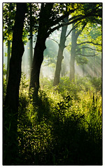 Morning  Rays (Ted Bowman Photography) Tags: oakopeningsmetropark canon 30d sunrise lightrays new edit