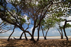 IMG_7225 ~ pepohon pantai (alongbc) Tags: day tree nature landscape environment beach pantaisepat kuantan pahang malaysia travel place trip canon eos700d canoneos700d canonlens 10mm18mm wideangle happyplanet asiafavorites