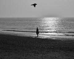 Timing (Andy Jah) Tags: nikkor nikon blackandwhite water silhouette oneperson bird sunrise sky sun sea bw blackwhite