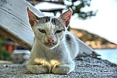 Serenity ©twe2014☼ (theWolfsEye☼) Tags: thewolfseye cats katzen hauskatzen housecats animals tiere miau domesticcats inexplore mochlos crete kreta serenity