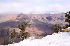 IMG_8593 (patterpix) Tags: grandcanyon arizona snow trees winter canyon storm