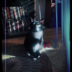 Weird Little Visitor.. (Captain Creepy) Tags: ufo alien feliscatus feline cat gomez felisgomezius tractorbeam transporter beammeupscotty