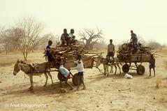 mali (piccvjiw13) Tags: afrika africa sahel environment firewood milieu brandhout kinderen ezels ezelkar begroeing bomen baobab horizontal