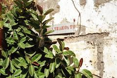 (Alessandro Venerandi) Tags: flaneur streetphotography pastel urban 35mm filmphotography kodak kodakcolorplus200 ricoh35zf italy salerno
