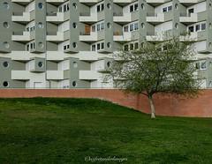 Limoges autrement 3, résidence étudiante. (steflgs) Tags: architecture minimalisme limoges hautevienne limousin arbre tree minimalism graphisme graphic