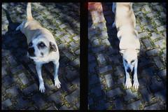 _RAK9704 (Daniele Pisani) Tags: olympus pen velvia50 costanza susanna baby sitter neve cani lea dylan macchina giardino half frame