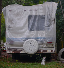 Two eerie looking cats one sitting in front and on top of RV camper (Rushay) Tags: ominous camper scary eerie cats vehicle deridder unitedstatesofamerica