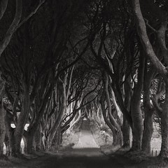 Prepare for the Game of Thrones (-liyen-) Tags: darkhedges northernireland bw gameofthrones onlocation scenery landscape trees challengeyouwinner cyunanimous