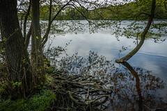 Am Sankelmarker See (Doblinus) Tags: schleswigholstein sankelmarkersee nikon nikon1870 nikond50