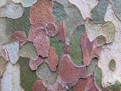 Abstract Bark (Brix5) Tags: brix5 bark abstract texture vandusenbotanicalgarden canong16 canada