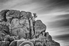 Birds Eye View (Mark S Weaver) Tags: california joshuatree nationalpark blackwhite