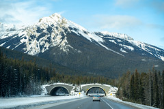Animal crossing bridge along the Trans Canada Highway (Highway 1) in Banff National Park in winter (m01229) Tags: nationalparks parcscanada winter landscape mountainswinter alpine drive bridge roadtrip canadian banffnationalpark rockymountains underpass transcanadahighway mountains canada trees scene animalcrossing road beautiful travel highway transportation banff cars animalbridge season vehicles canadianrockies rugged