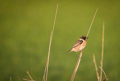 lightness (Angelo Petrozza) Tags: light lightness leggerezza leggero uccello uccelli birds bird green verde 55300f458 angelopetrozza nature natura birdwatching caccia hunter
