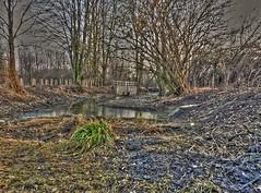 Winter swamps (Ostravak83) Tags: ostrava proskovice 2019 únor february nikoncoolpixp1000 ultrazoom hdr vysokýdynamickýrozsah bažina swamp venkov countryside voda water stromy trees bahno mud zima winter mokřady wetlands příroda nature