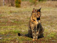 DSC_6391 (FMAG) Tags: 201903 rudka cat kot koko