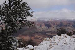 IMG_8594 (patterpix) Tags: grandcanyon arizona snow trees winter canyon storm