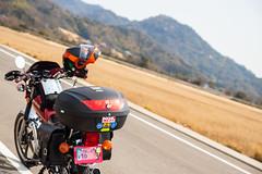 ススキを横に、走り抜ける。 (mayuri041) Tags: 大崎上島 gn125h motorcycle オートバイ
