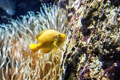 ¡Eh, que yo no soy una dorada! (lebeauserge.es) Tags: madrid españa naturaleza zoo animal acuario agua pez