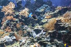 Peces de ciudad 1 (lebeauserge.es) Tags: madrid españa naturaleza zoo animal acuario agua pez