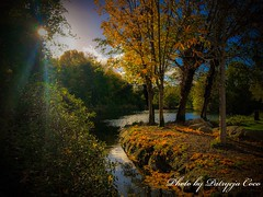 Magic Autumn (Patrycja Coco) Tags: autumn trees river sunnyday goldautumn colourfull magicnature nature plants park